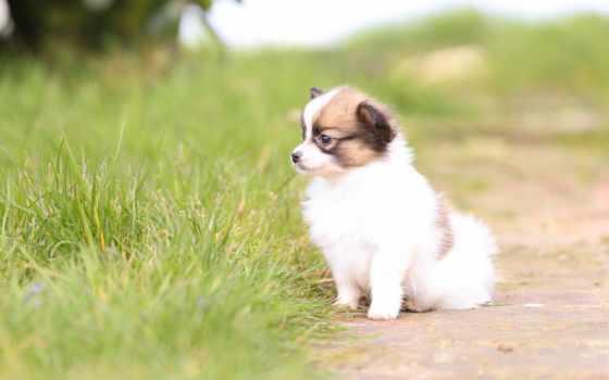 tapety, собака, листва, znajdziesz, осень, dogs, cute,