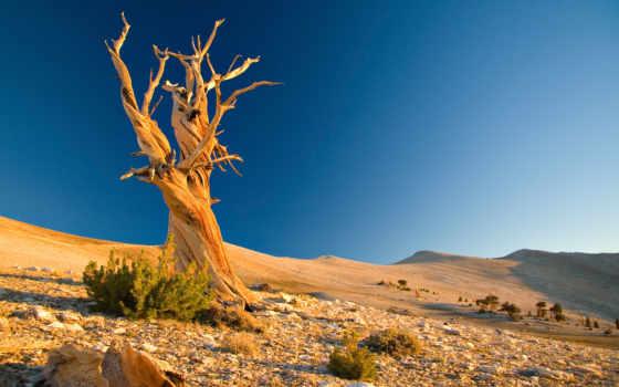 дерево, сухое, пустыня, камни, favourite, мертвое,