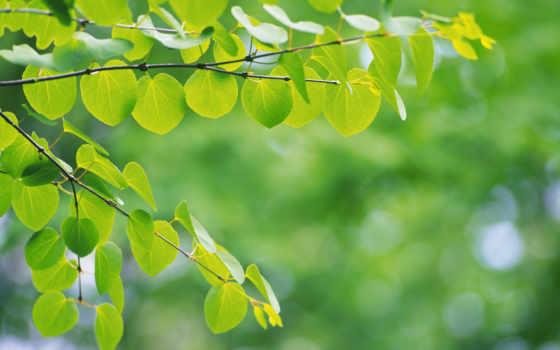 fondos, pantalla, naturaleza, hojas, fondo, con, verde, medioambiente, del,