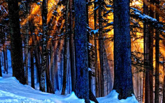 wood, магия, фон, картинка,