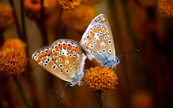 бабочки, mariposas, насекомые