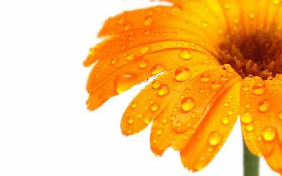 оранжевый, cvety, фотообои, цена, цветы, tub, спальня
