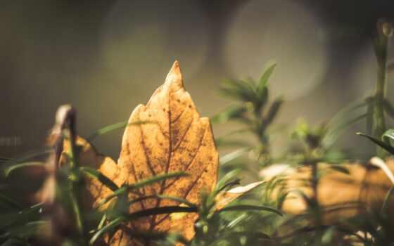 дерево, leaf, branch, осень, природа, трава, зелёный, sunlight, цветы, color