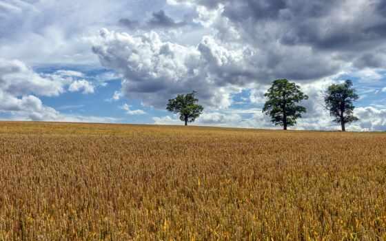 landscape, поле, качество, widescreen, природа, fore
