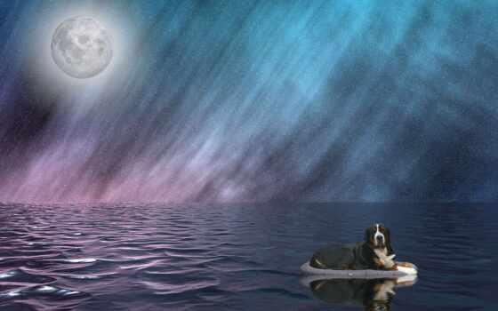 луна, domain, public, фото, strand, royalty, water, собака, во, море, небо
