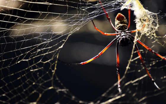 паук, насекомое
