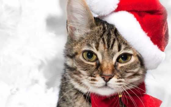 год, кот, новый, бантик, дымчатый, красный, holidays, колпак, view, кошки,