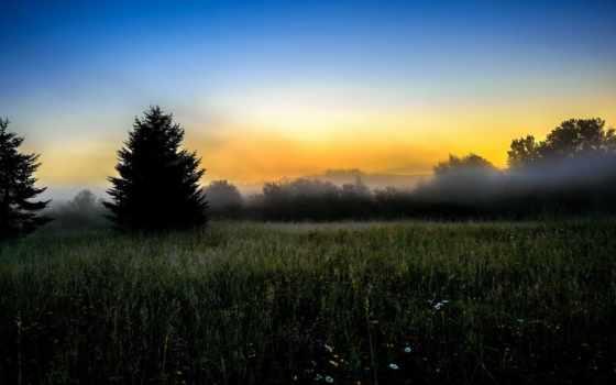 early, утро, поле