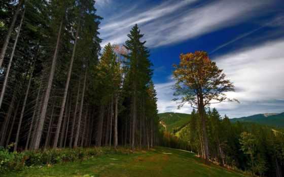 леса, лес, большой