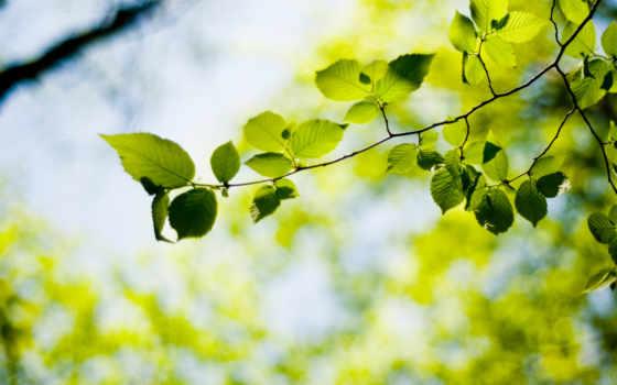 листва, дерево, макро, ветки, ветке, растение, bokeh, природа, листья,