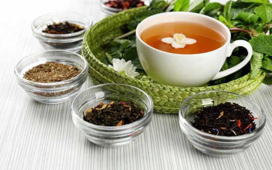 чая, чая, виды, сорта, пуэр, день, международный, видов,