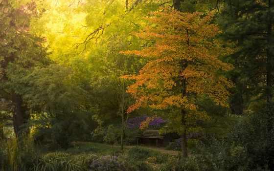 дерево, картинка, garden, trees, листья, осень,