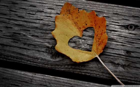 сердце вырезанное в листике
