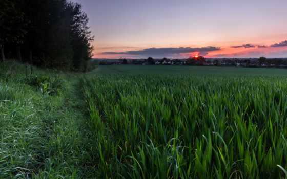 трава, full, winter, небо, закат, памятник, description,