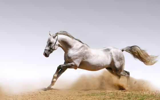 лошадь, лошади, кони, лошадьми, пыль, full,
