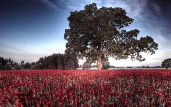 поле, природа, дерево, цветов, весна, всех, хорошем, заказывай, сайте, забирай,