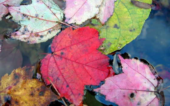 осень, обоев
