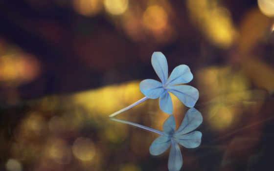 свет, цветы, блики