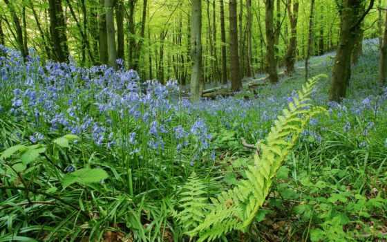 cvety, лес, колокольчики, папоротник, июл, time, пейзажи -, колокольчиков, фотографий, поляна,