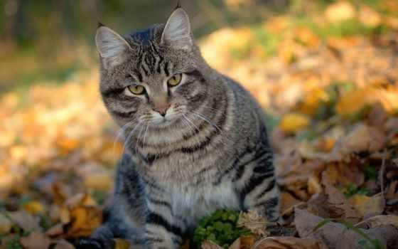 кот, осенний