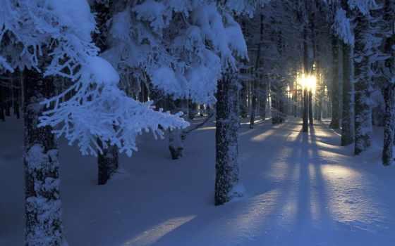 лес, снег