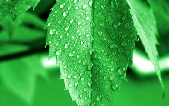 роса, листьях, росы, красивые, макро, капли, продолжение,