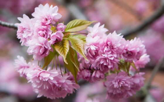 цветы, весна, весны