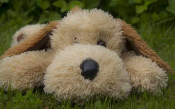медведь, собака, игрушки