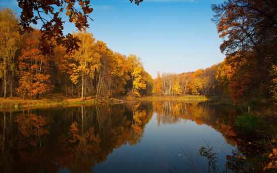 осень, trees, лес