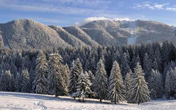 лес, winter, нравится, заснеженный,