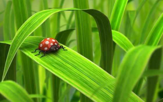 трава, божья, коровка, листва, капли, зелёный, роса, мухомор, pinterest,