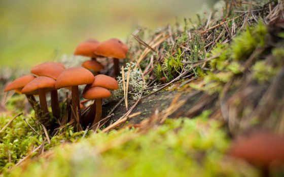 pilze, фактов, bilder, wald, pflanzen, грибах, грибы, herbst,
