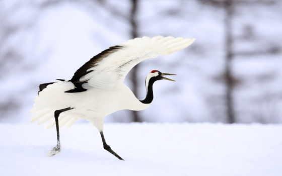 birds, crane, птиц