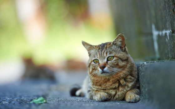кот, котенок, природа, animal, free, средний, kartinika, striped
