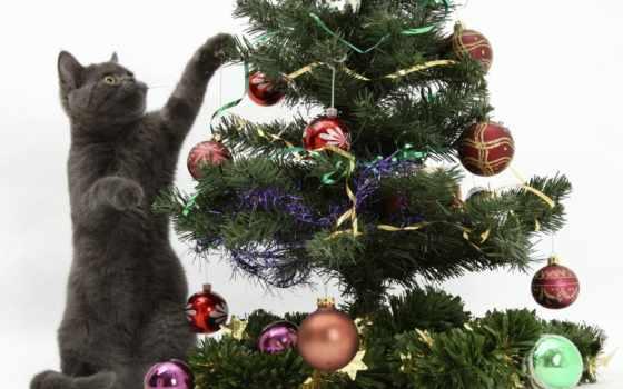 новогодние, christmas Фон № 31239 разрешение 1600x1200