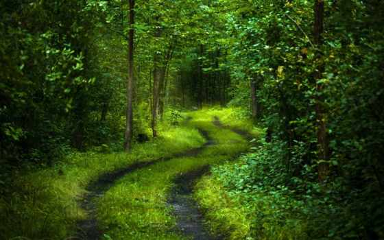 дорога, лес, деревья