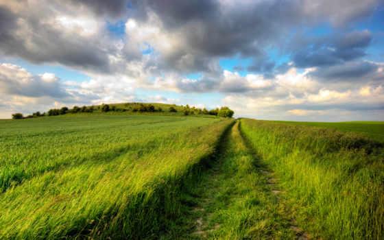 поле, трава, дорога