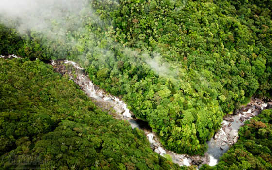 daintree, rainforest,