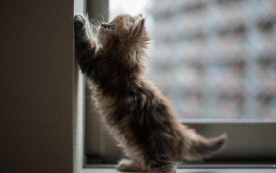 окно, кот, котенок