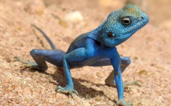 are, blue, animals