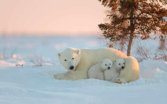 следы, интересные, медведь, медведя, youtube, white, белого, медведях, белых, медведи, интересных,