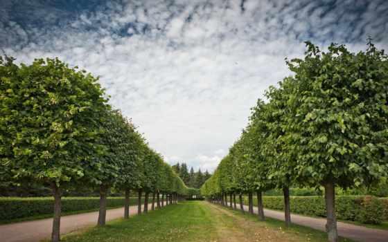 аллея, trees, природа, garden, поля, favourite, страны, мира,