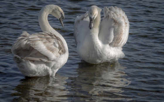 birds, animals, птица, озеро, изображение, wild, animal, цветы,