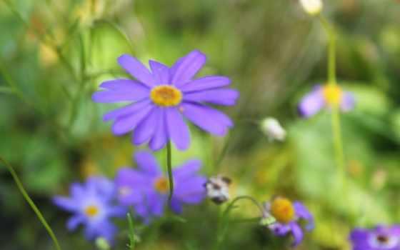 зелёный, summer, cvety, газон, классные, цветы, pictures, природа, только,