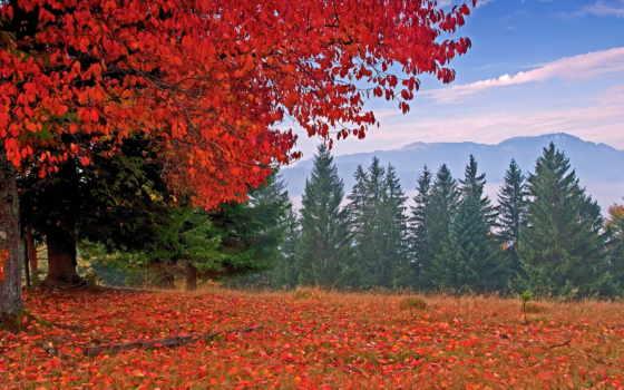 осень, горах, природа, картинка,