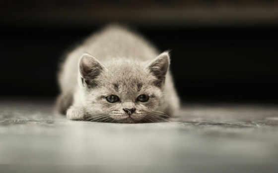 zhivotnye, love, кот