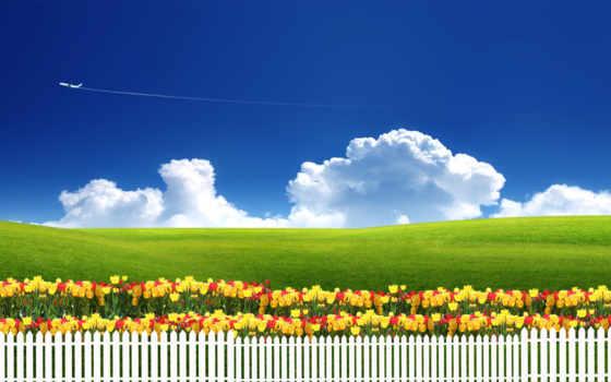 природа, цветы, тюльпаны, трава, забор, небо, луг,