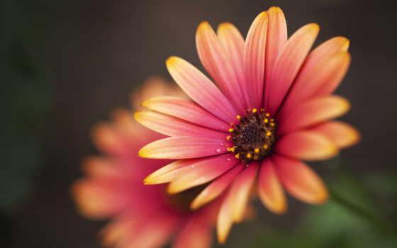 цветы, красивые, цветами, дек, yellow, кот, black,