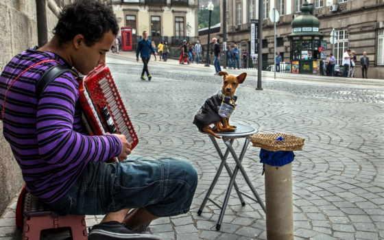 улица, музыка, мужчина, собака, скрипка, изображение, музыкант, fone,