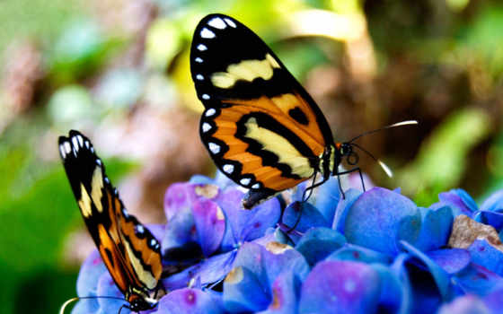 бабочки, цветах, cvety, красивые, card, бабочек,